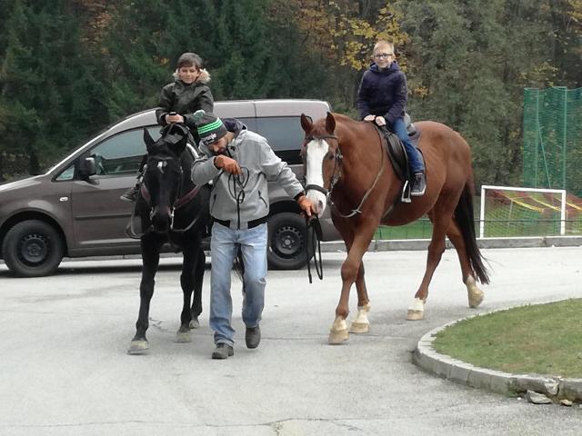 konji-4
